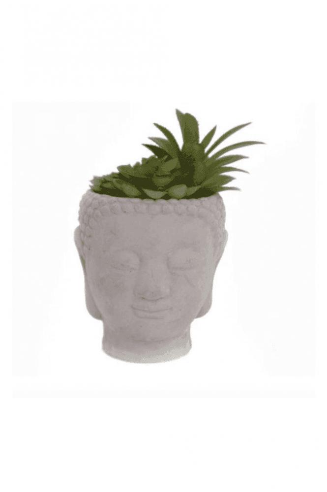 Buddha Head Succulent - Large