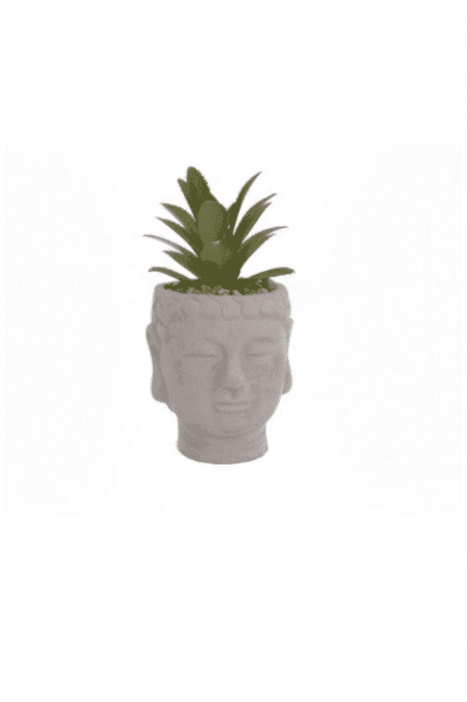 Buddha Head Succulent - Small