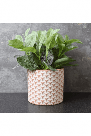 Green Plant in Cement Pot with Triangle Design Red 25cm